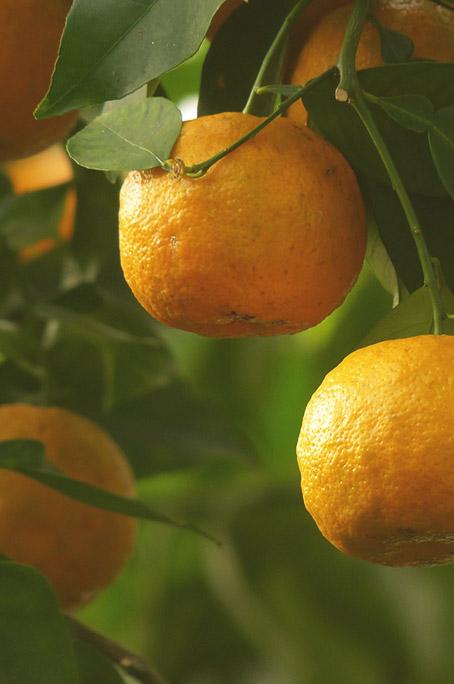 Savonnerie-la-limoniere-ingrédients-2